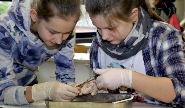 Naturwissenschaftliche Neugierde: Jana und Senta-Sophia sezieren hier das Auge eines Hausschweines.FOTO: Armin Fischer